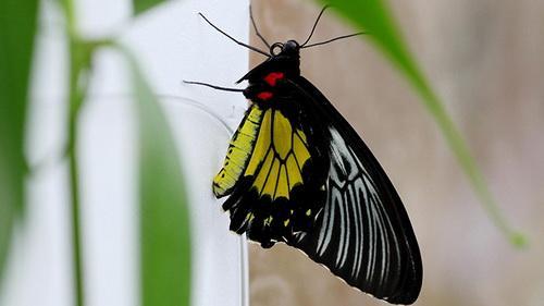 """Cảm nhận 5 """"cảm giác"""" ở vương quốc bướm"""