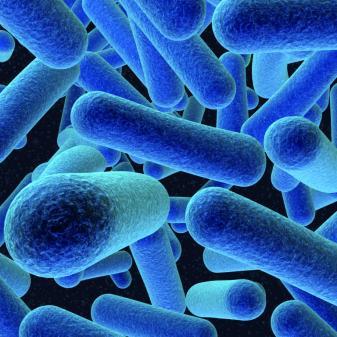 AccuPid Listeria monocytogenes detection kit