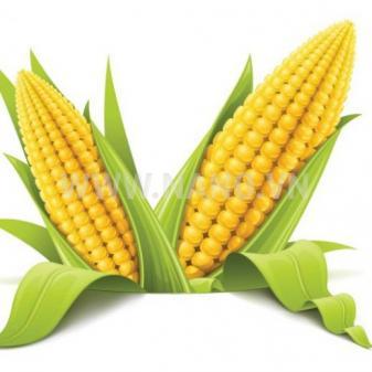 AccuPid MIR162 Maize Detection Kit