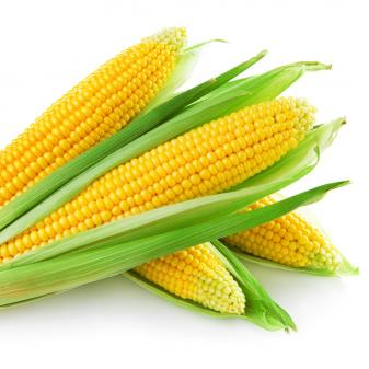 AccuPid Maize zSSIIb Detection Kit