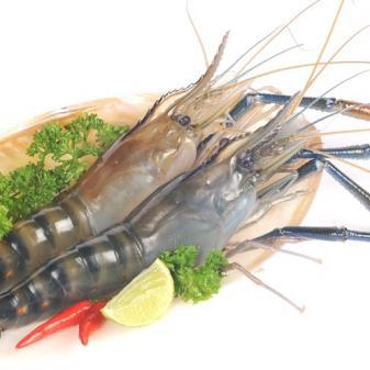 AccuRive Shrimp DNA Prep Kit