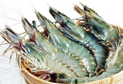 AccuRive Shrimp sDNA Prep