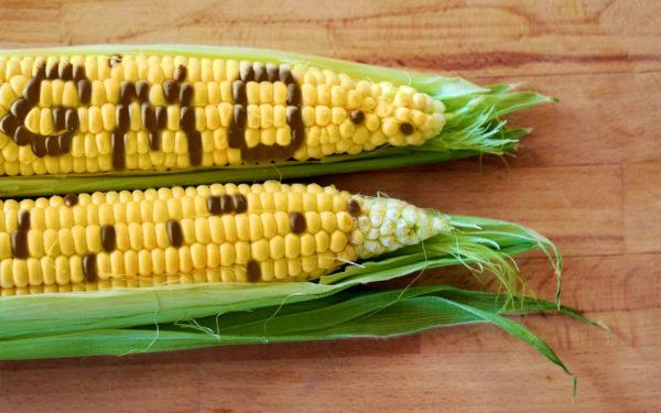 AccuPid MON 87460 Maize Detection Kit